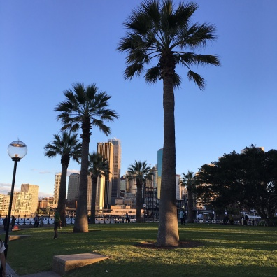 palm trees + Skyline